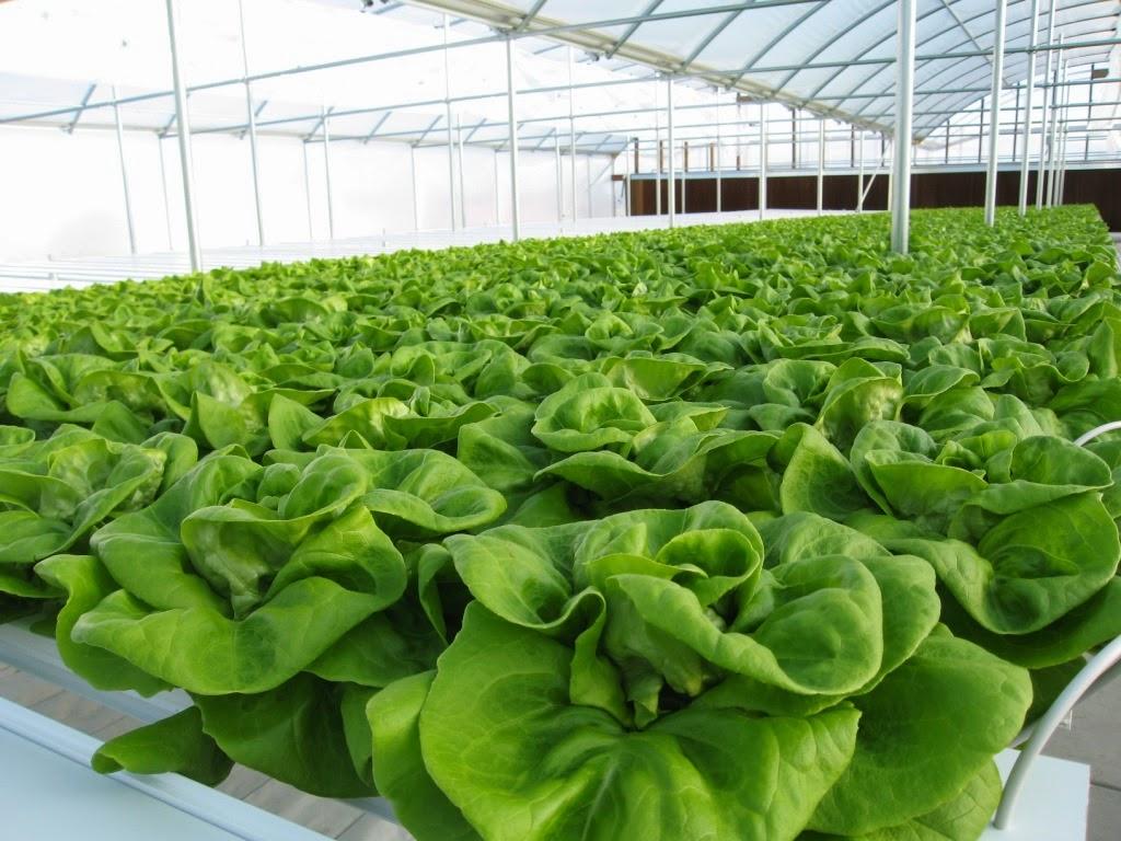 Tham quan nơi sản xuất cung cấp rau củ quả sạch Dalat đạt chuẩn Vietgap cho Vườn Xanh Của Bạn