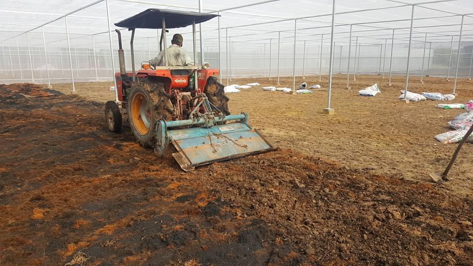 Vườn sản xuất rau sạch Trung An (Củ Chi) đã hoàn thành giai đoạn đầu tiên.